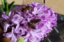 Bienen04