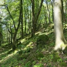 Wald-Altenhain01