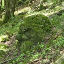Wald-Altenhain02