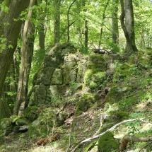 Wald-Altenhain03