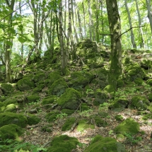 Wald-Altenhain04